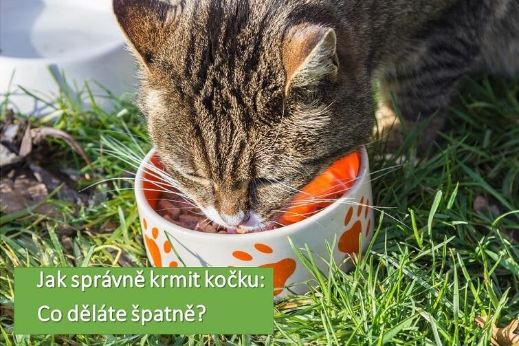 kterých chyb se dopouštíte při krmení kočky?